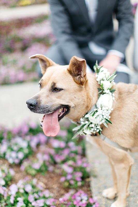Best Dog Flower Collar