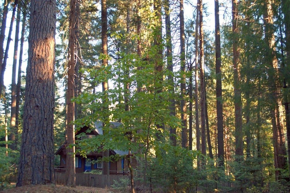 Pollock Pines 6 2500w.jpg