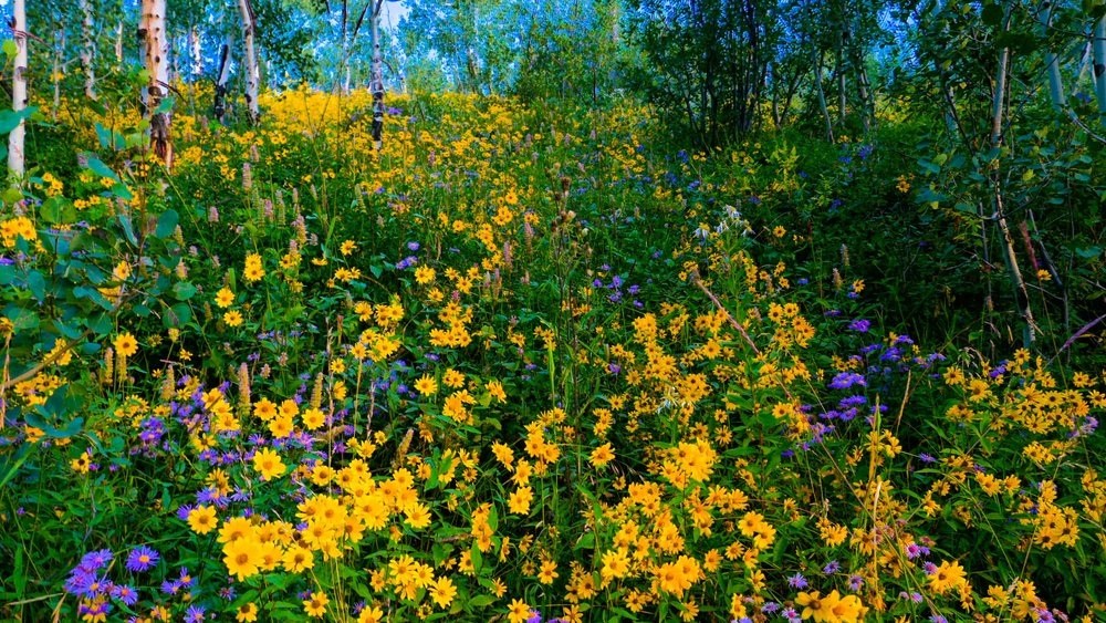 spring012.jpg