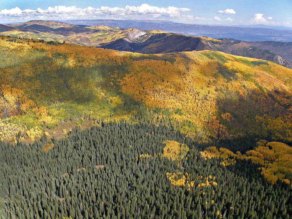 TD Aspen Stand - Aerial.jpg