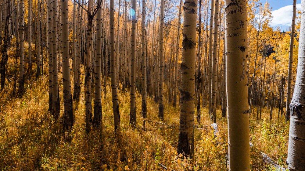 treesshadow0201.jpg