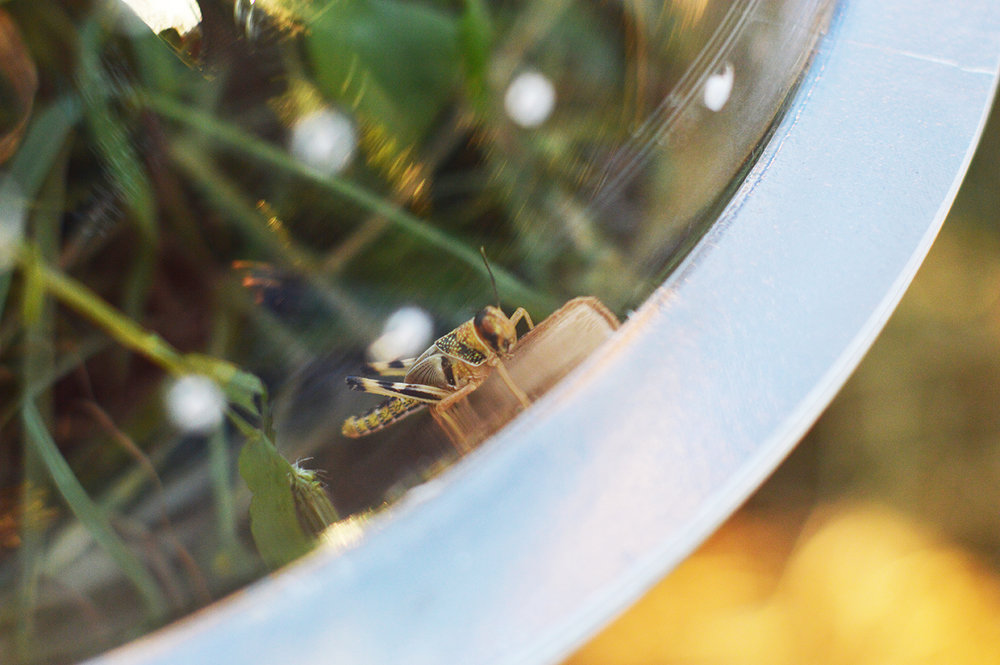 Wunderbugs_14_By-Aughost.jpg