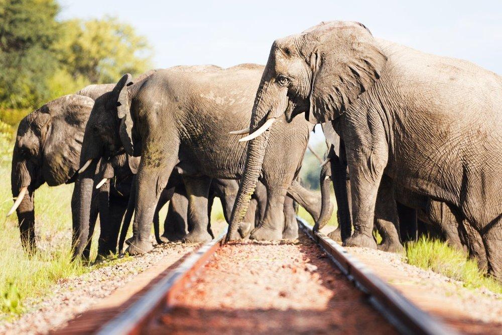 HwangeCamelthorn_ElephantsCrossingHR_1024x1024.jpg