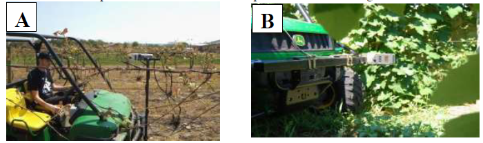 Figure 1: Examples of a canopy sensor being used (A) early in the season to sense early season development and (right) late in the season to sense differences in the canopy side-curtain development.