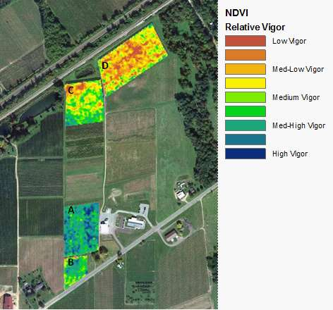 Figure 4: The NDVI response for the juice grape blocks at CLEREL Portland. Blocks A, B and D are Concord, Block C is Niagara.