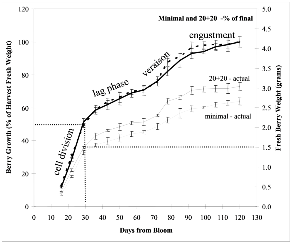 Figure 5. Typical Concord berry growth curve showing both actual and % of final berry weight for balanced (20+20) and minimal pruned vines.