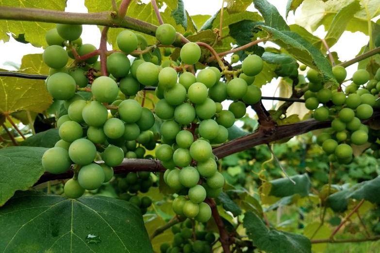 berry1.jpg
