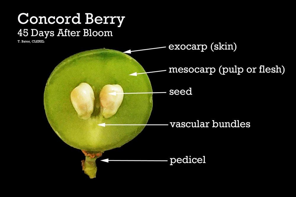 berry4.jpg
