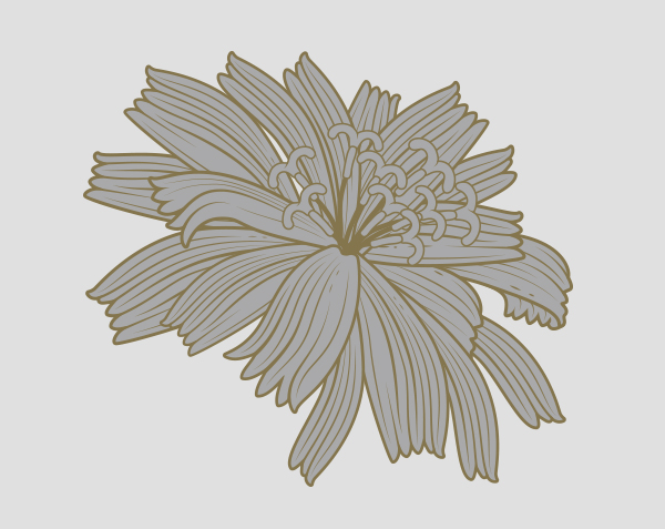 _0011_Chicory Flower copy.jpg