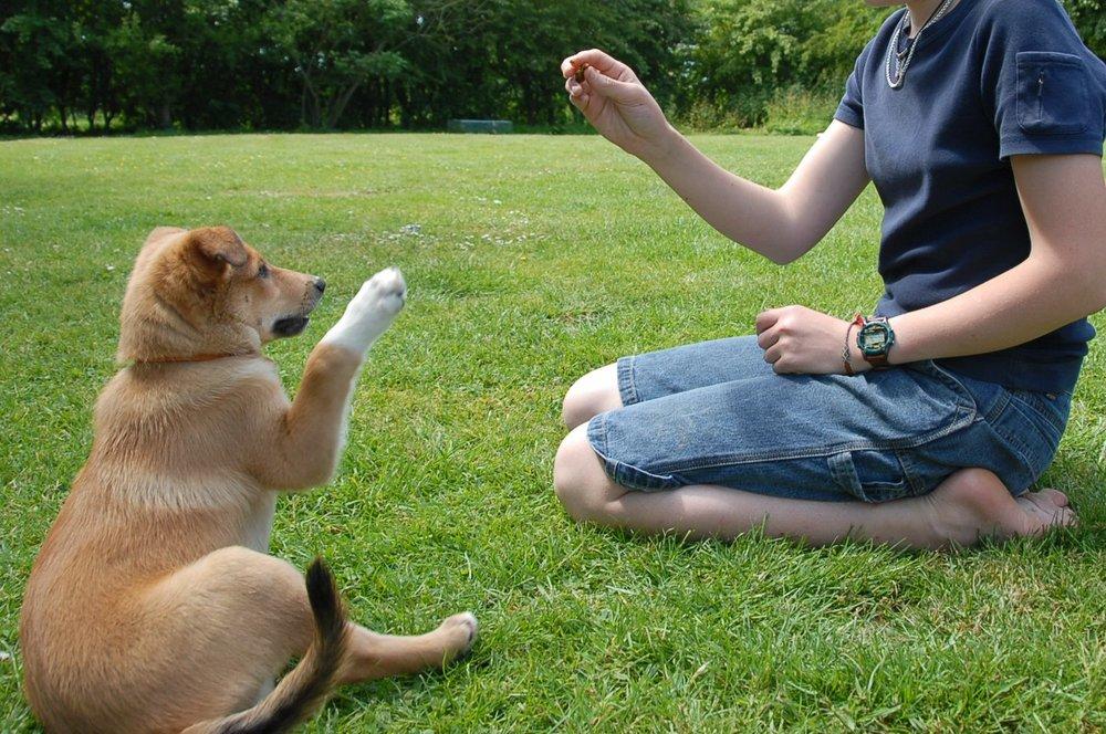 Dog-Training.jpg