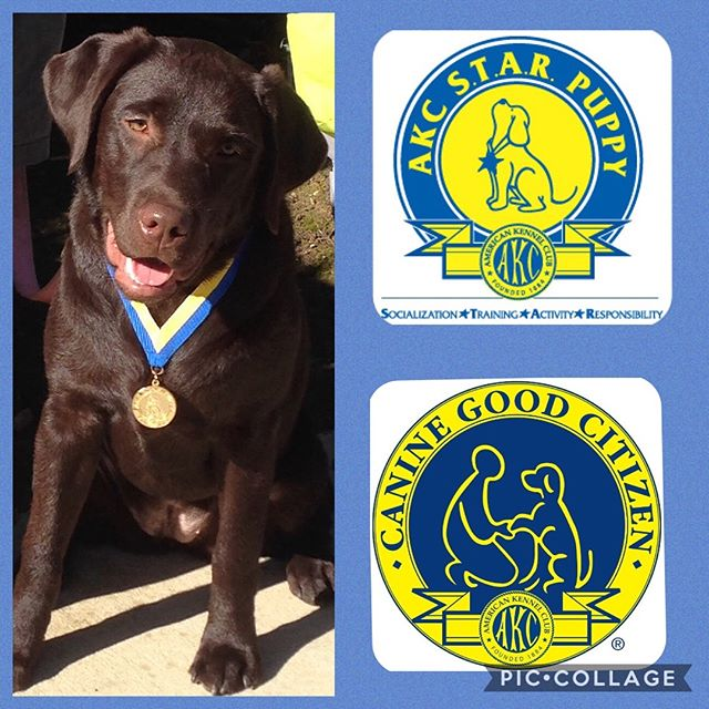 STAR Puppy and Canine Good Citizen testing on Saturday, March 23rd. Must preregister. For more information or to register call 909-599-8844. #kellysk9college #dogtraining #CGC #caninegoodcitezen #STARpuppy