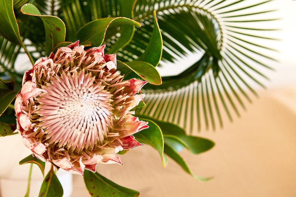 Florals_KF Photo66.jpg