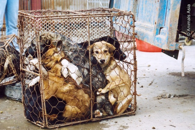 caged dogs and cats.jpg