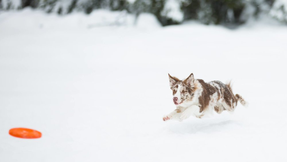 Sirella snow.jpg