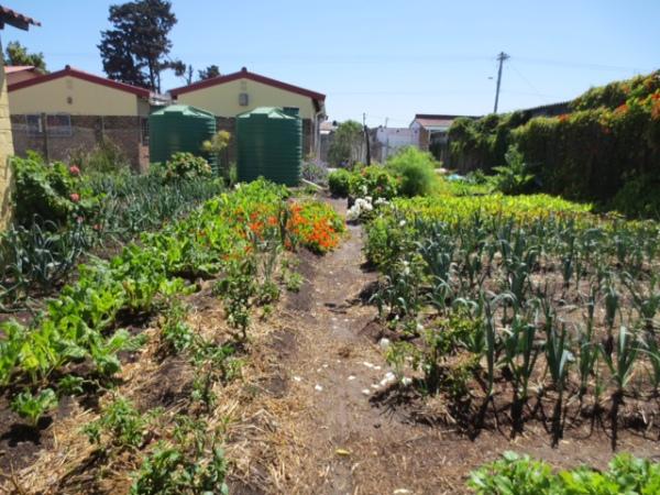 blog 2015 gardens 2.jpg