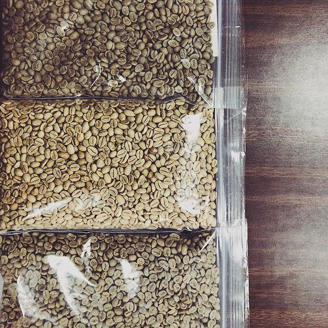 Pre-roast beauties! ☕️ order by tomorrow to pick up Sunday. #greencoffeebeans #stmaryscoffee