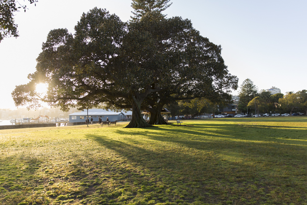 Steyne Park.