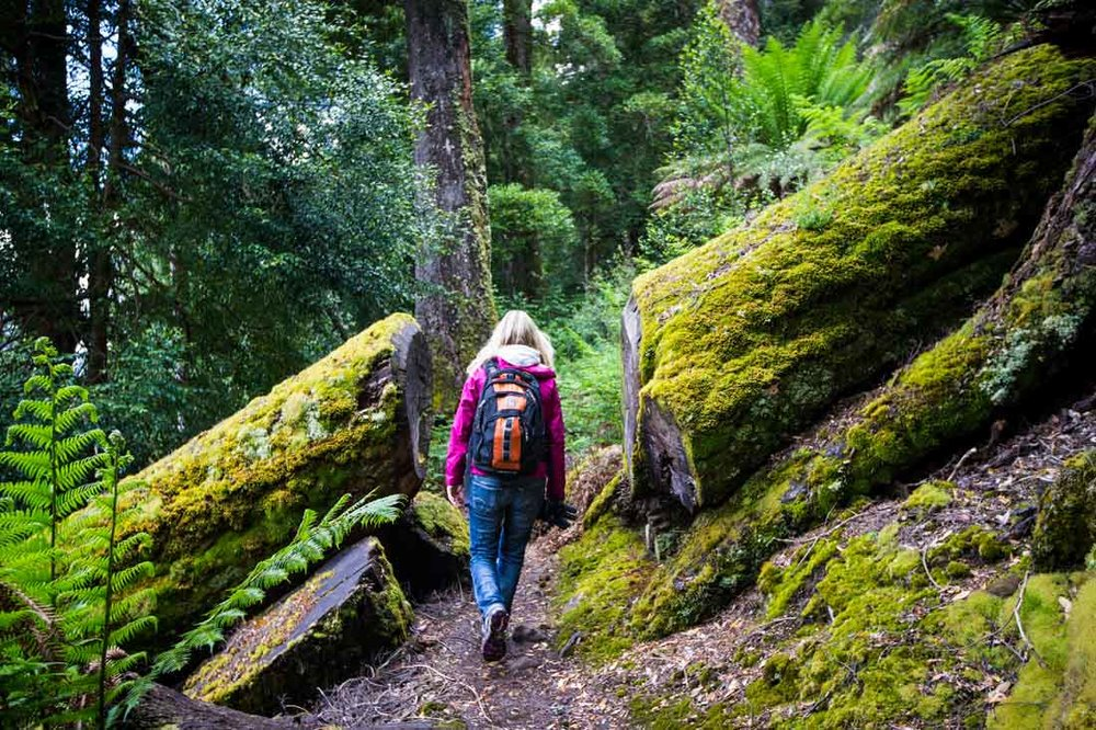 Hiking In Cradle Mountain - ADVENTURE TOURS