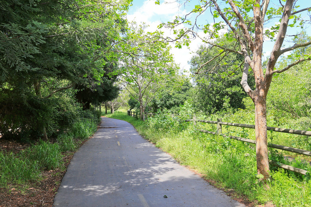 Los+Gatos+Trail+Cambell+Blu+Skye+Media+2-X2.jpg