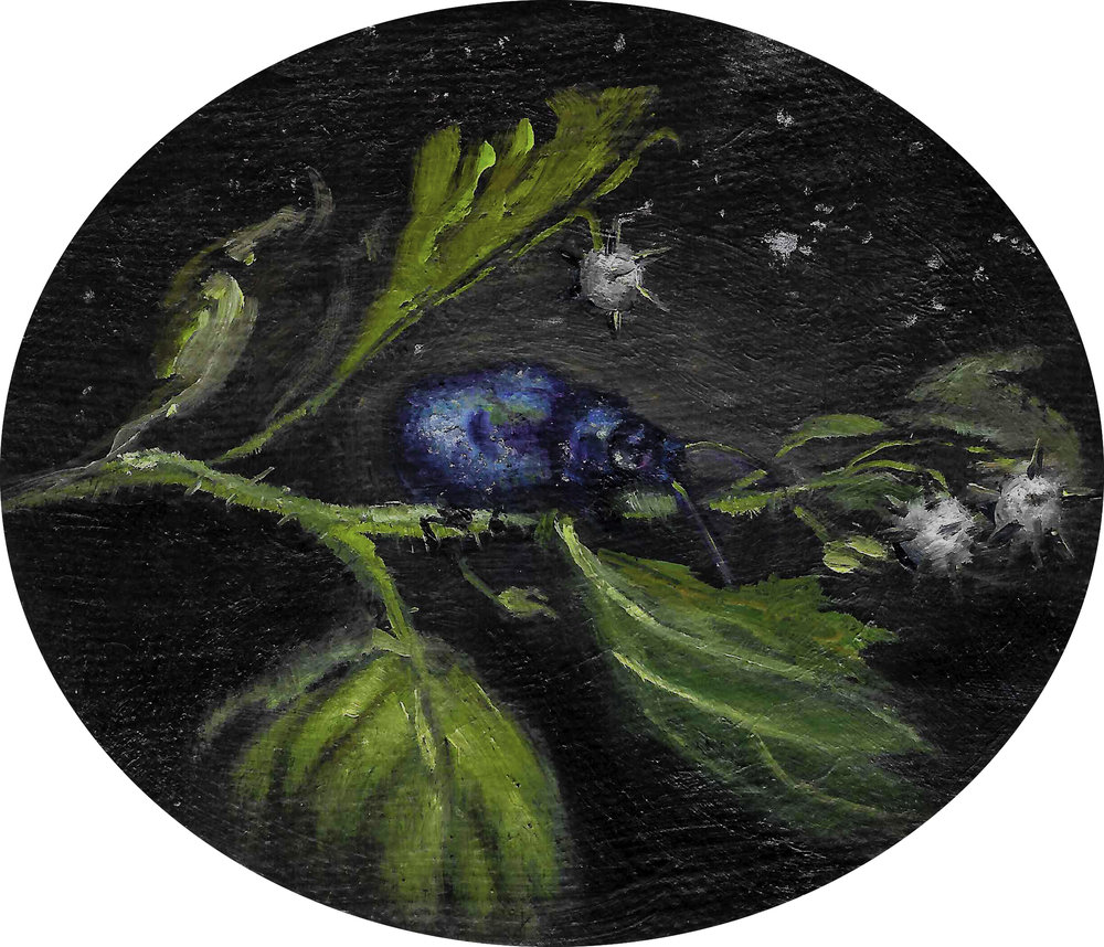 2017 - 'Mint Leaf Beetle by Moonlight'