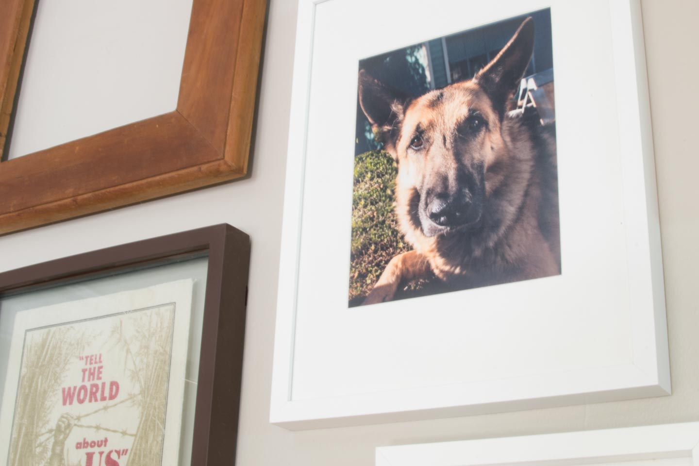 fall gallery wall close up of german shepherd