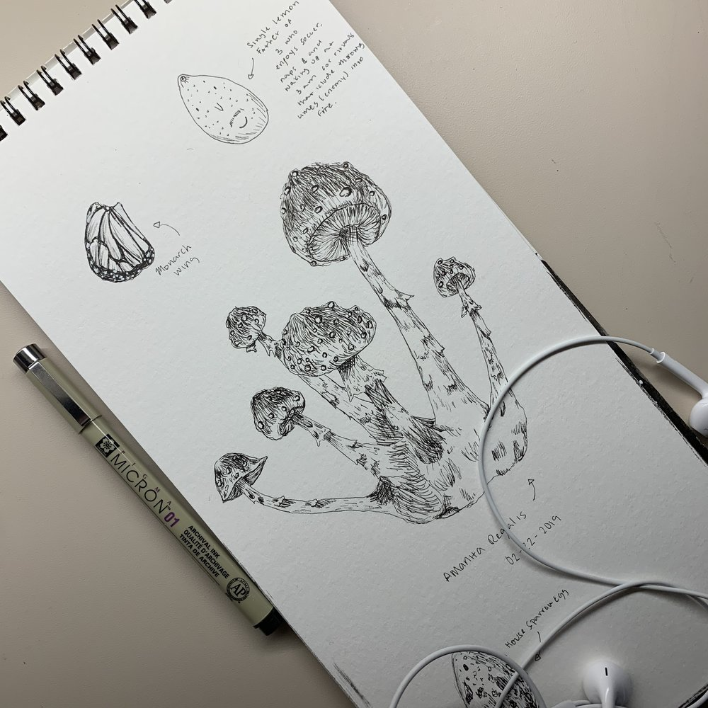 Botanical Mushroom Illustration