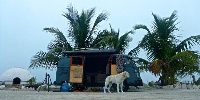 camp under palms