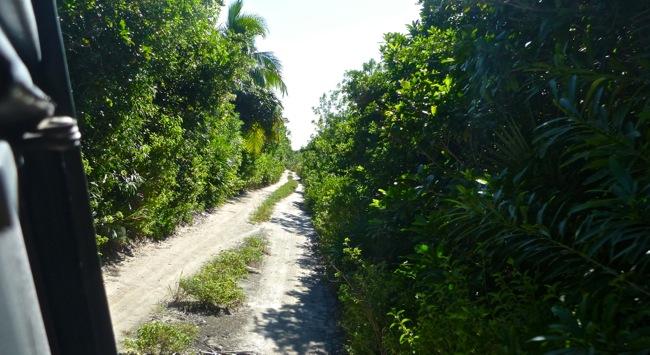 xcalak road