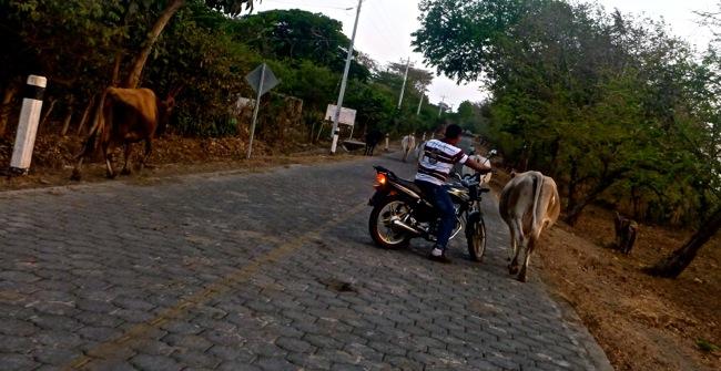 moto herding