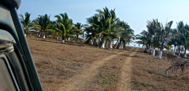 palm lot