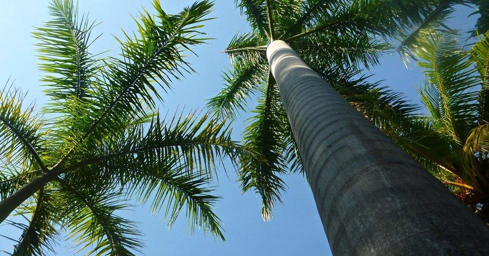 big-palms.jpg