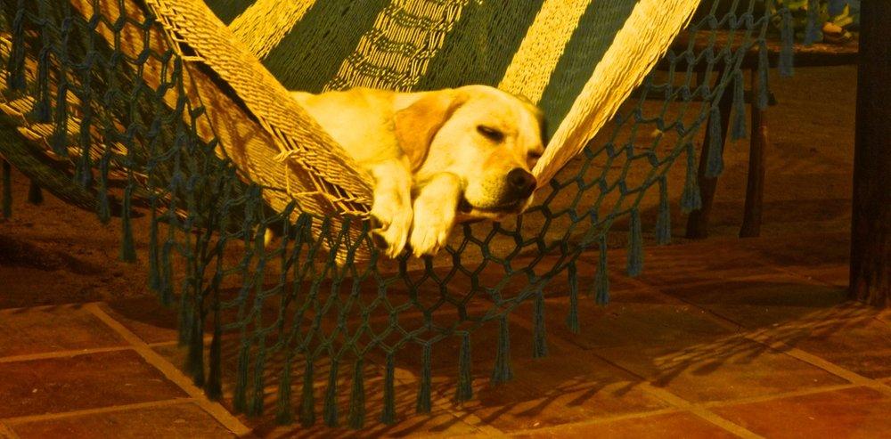 karma-hammock.jpg