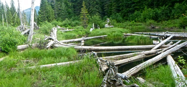 walupt lake