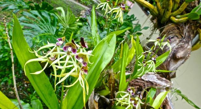lack orchids