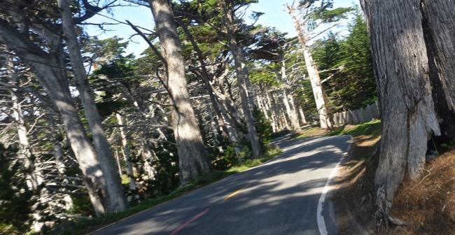 17 mile trees