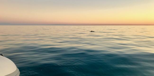 dolphin sunset.jpg