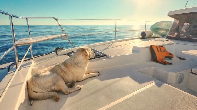 boat dog.jpg