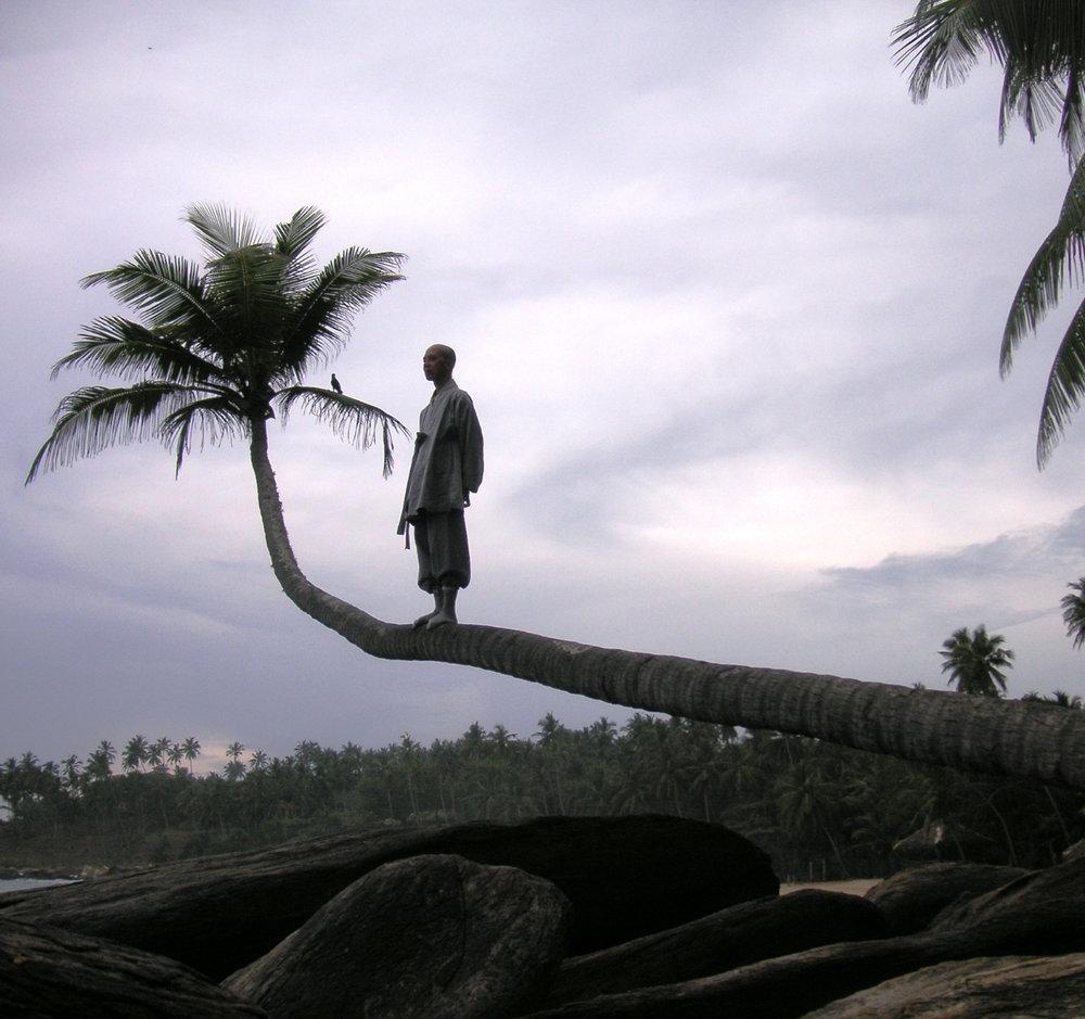 Sri+lanka_shi+fu+stand+on+coconut+tree.jpg