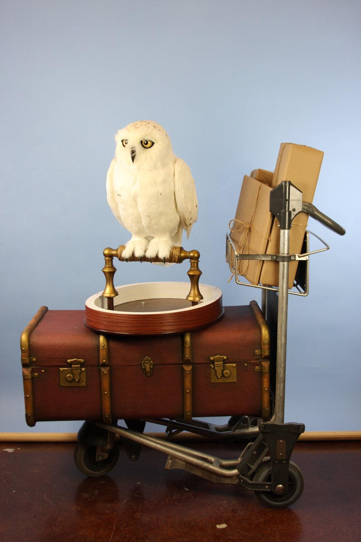 Snowy Owl Final (1).JPG