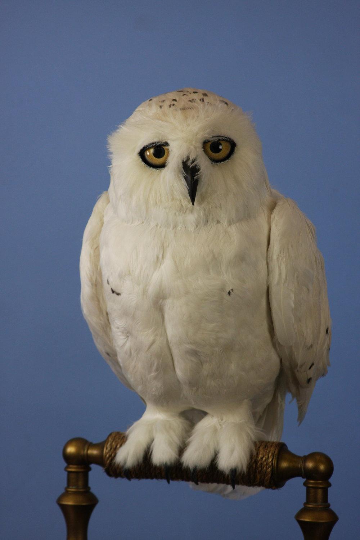 Snowy Owl Final (4).JPG