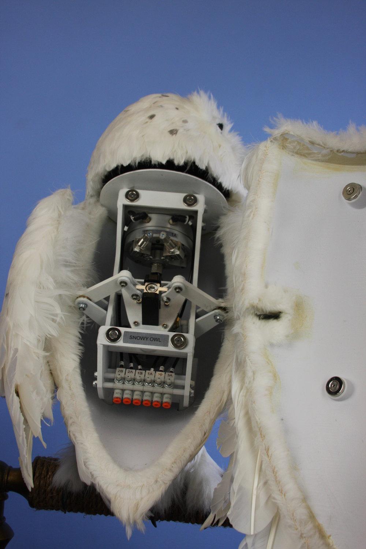 Snowy Owl Final (40).JPG