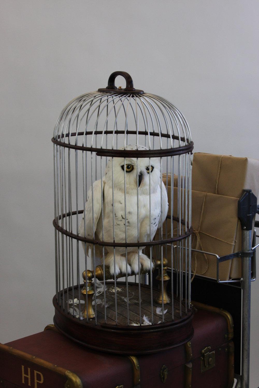 Snowy Owl Final (110).JPG