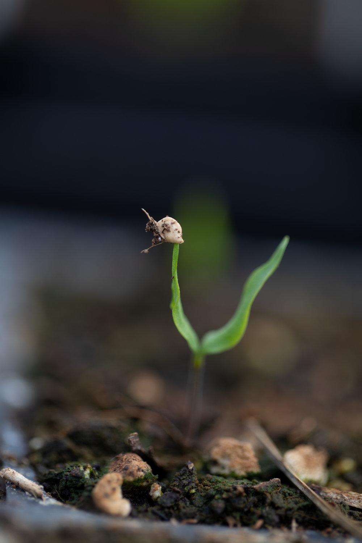 seed1.jpg