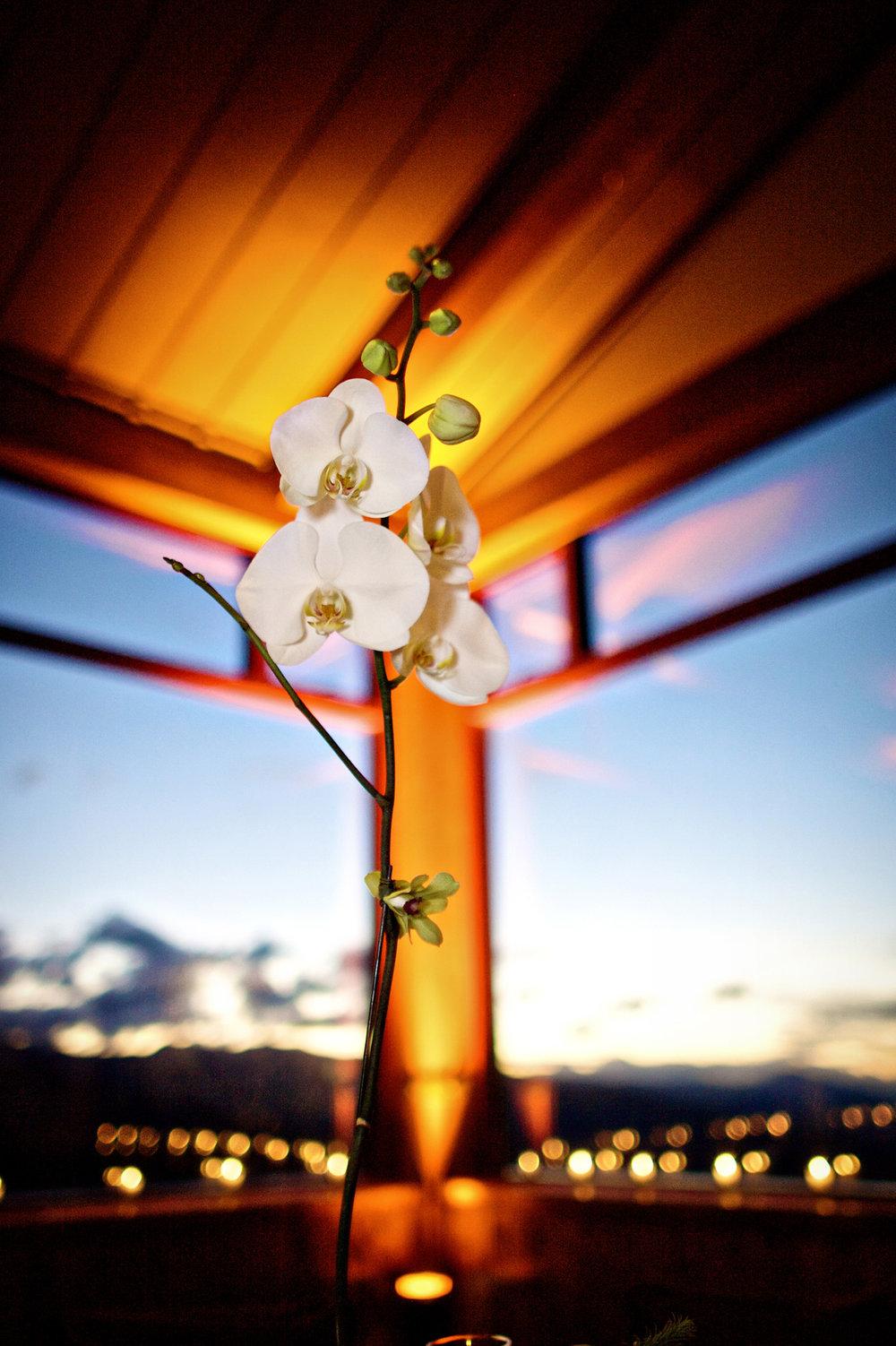 little-nell-wedding-023.jpg