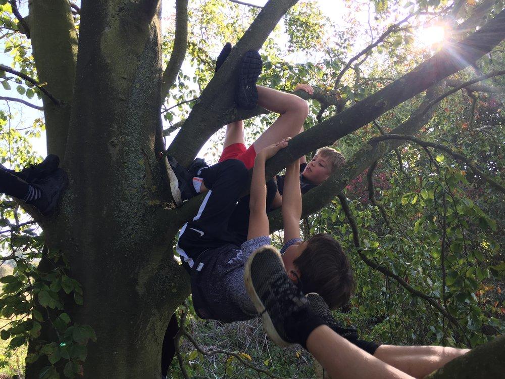Happy Days - Tree hanging game