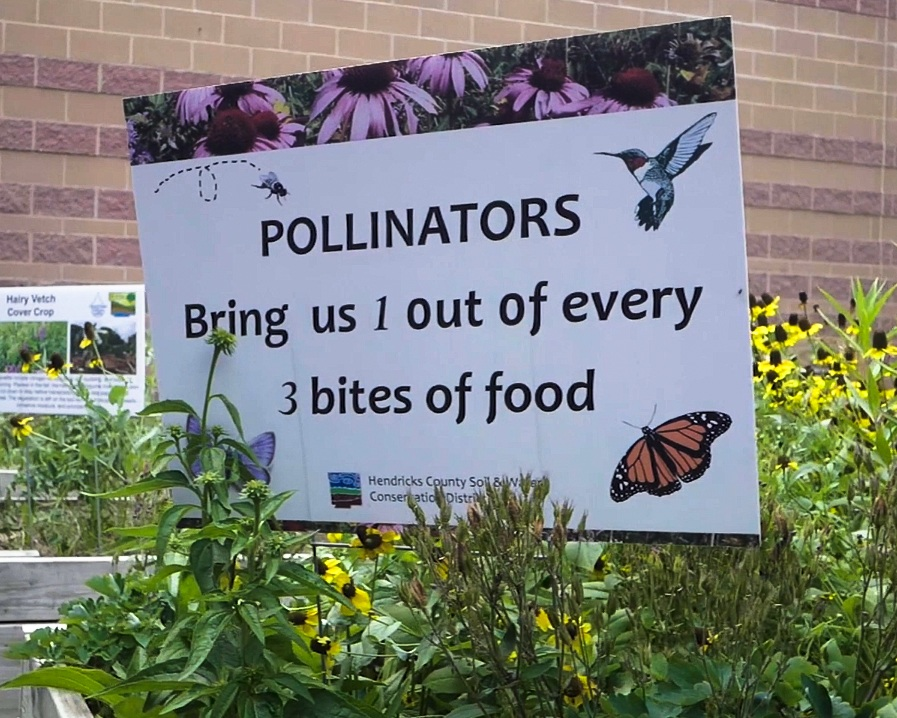Hendricks Conservation corner pollinators.jpg