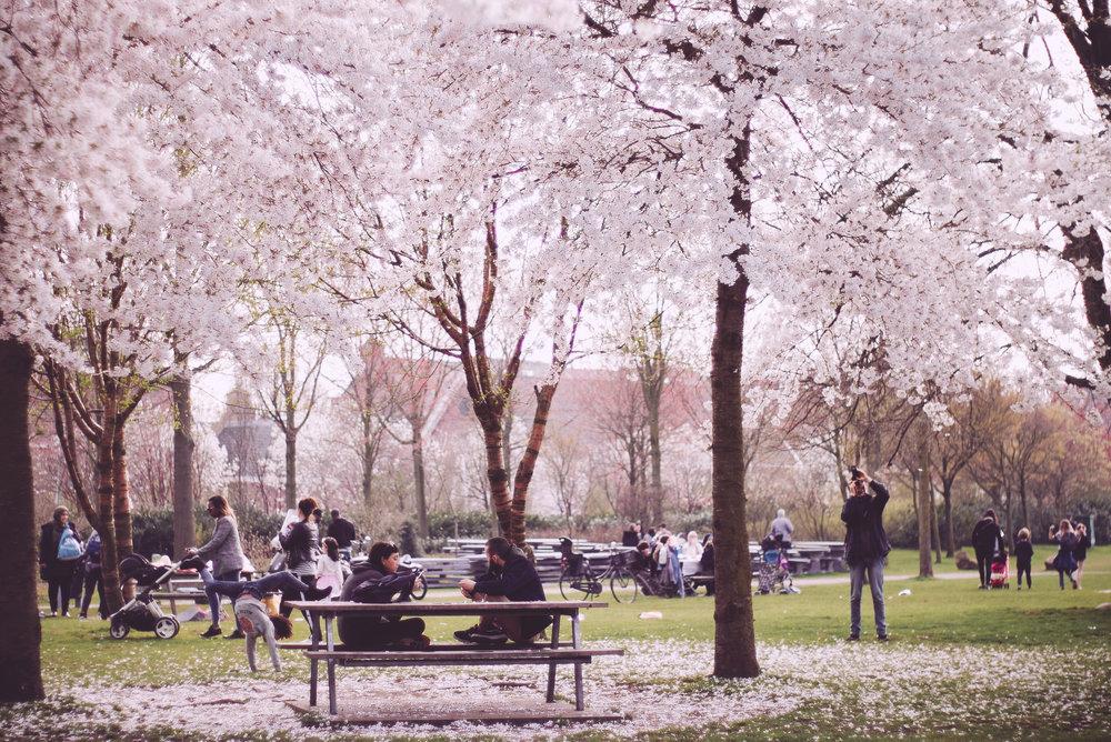 2018 APR Amsterdam Cherry Blossom Pink-13.jpg