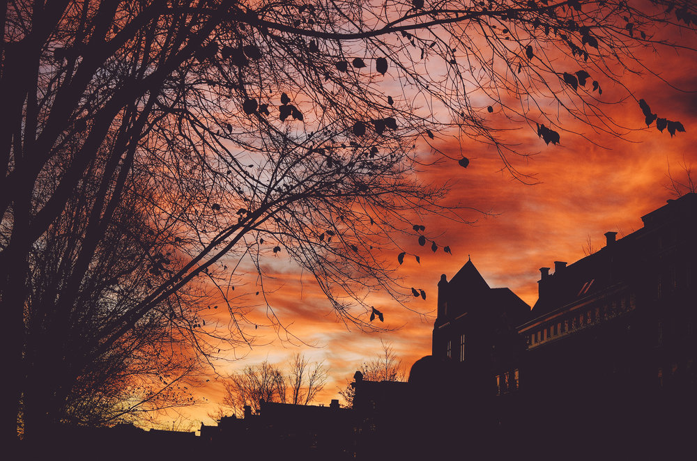 Amsterdam Autumn-15.jpg