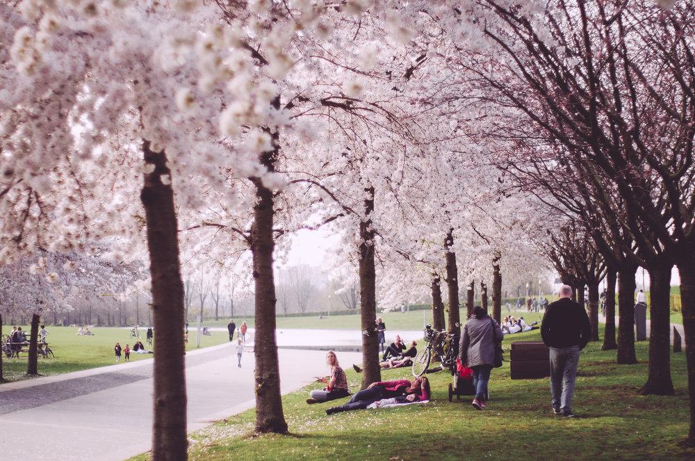 2018 APR Amsterdam Cherry Blossom Pink le-9.jpg