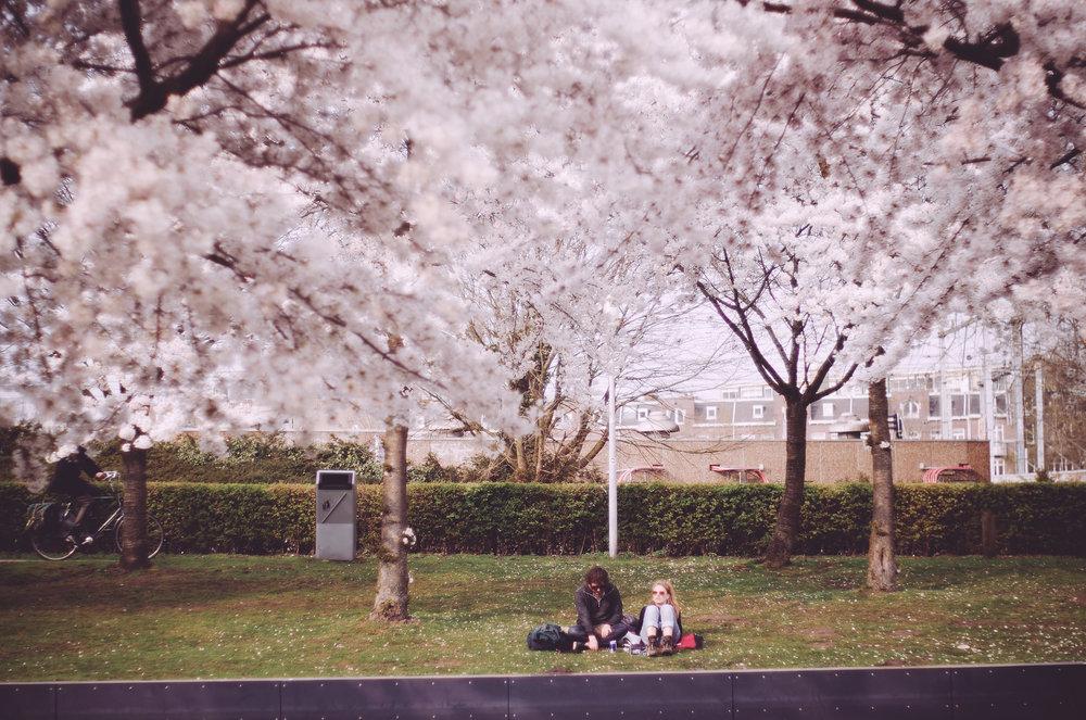 2018 APR Amsterdam Cherry Blossom Pink le-16.jpg